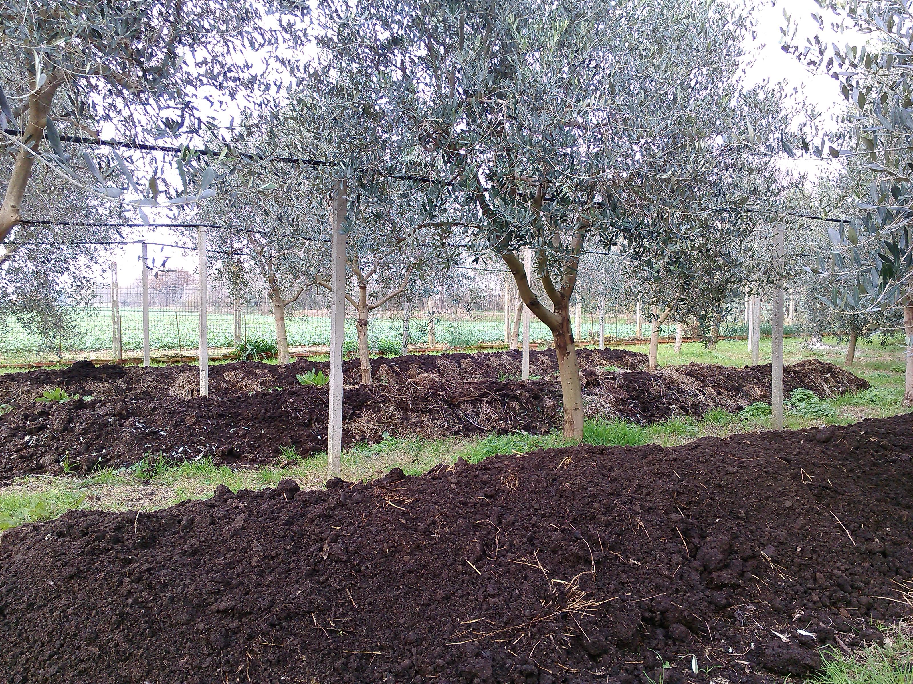 Lombricoltura, ecco come e perché cambiare forma alle lettiere per proteggere i lombrichi dal caldo
