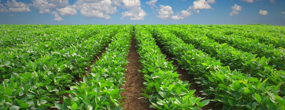 Agricoltura biologica: Toscana, dalla Regione 17 mln per chi coltiva bio. Domande entro il 15/5