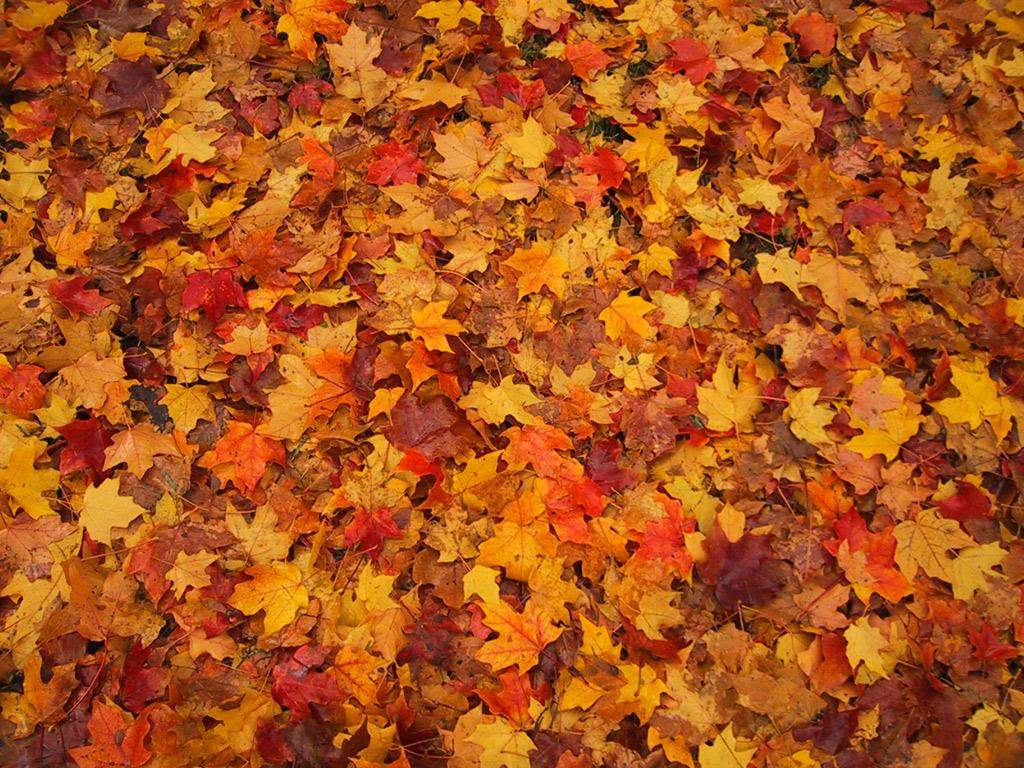 foglie secche 1