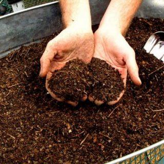 Lombricoltura, ecco come produrre 15 qli di humus di lombrico per mq in un anno